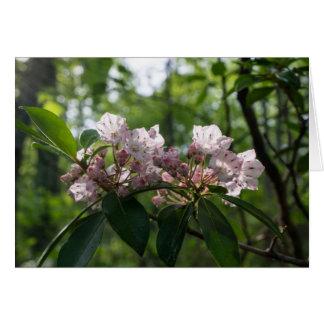 Tarjeta del Wildflower del laurel de montaña