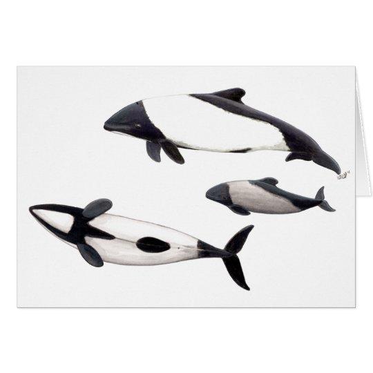 Tarjeta Delfin de Commerson o tonina ovejera