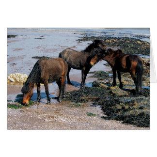 Tarjeta Devon del sur tres potros de Dartmoor en la playa