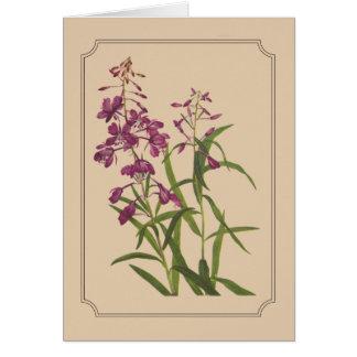 Tarjeta Dibujo botánico del vintage del Fireweed salvaje