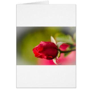 Tarjeta Diseño ascendente del cierre del rosa rojo