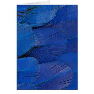 Tarjeta Diseño azul de la pluma del Macaw del jacinto