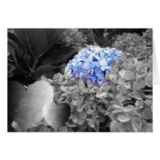 Tarjeta Diseño blanco y negro de las flores azules en