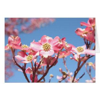 Tarjeta Dogwoods rosados