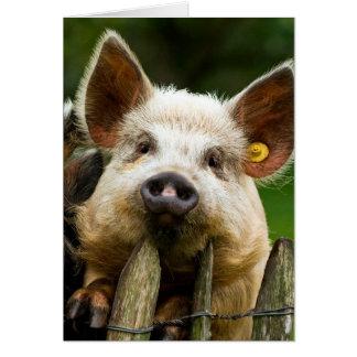 Tarjeta Dos cerdos - granja de cerdo - granjas del cerdo