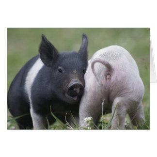 Tarjeta Dos pequeños cerdos; Cochinillos - animales