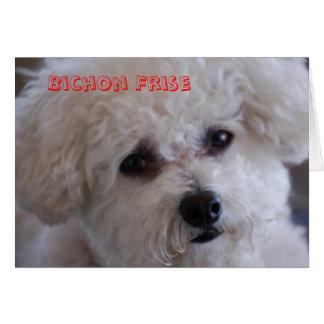 Tarjeta DSC_0060, Bichon Frise