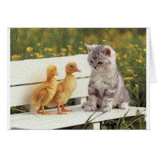 Tarjeta Duckheap y gatito de la entrevista del amigo