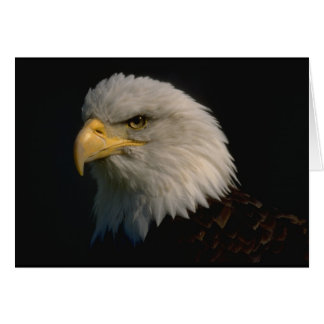 Tarjeta Eagle calvo americano