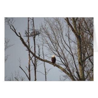 Tarjeta Eagle calvo y BlackHawk Notecard - esconda dentro