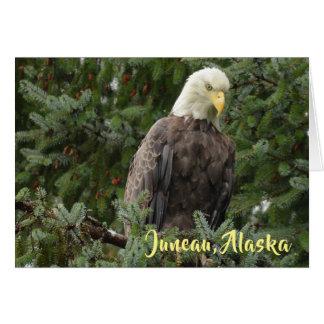 Tarjeta Eagles calvo de Juneau, Alaska