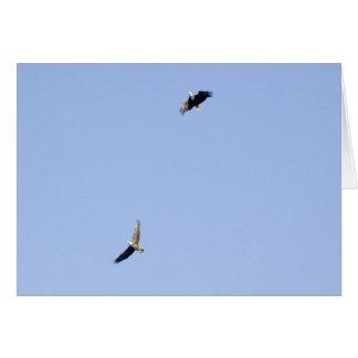 Tarjeta Eagles en la presa de Conowingo