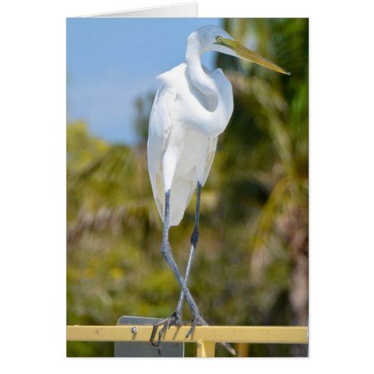 Tarjeta Egret