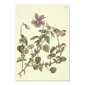 Tarjeta Ejemplo botánico de la violeta de cuernos