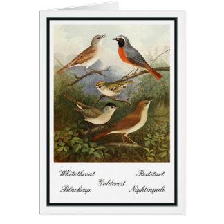 Tarjeta Ejemplo británico de los pájaros del jardín del