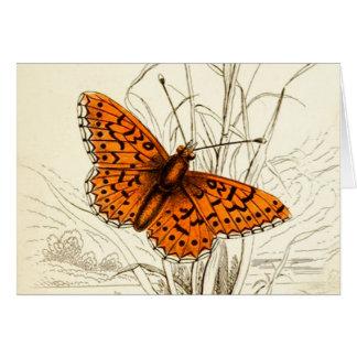 Tarjeta Ejemplo, naranja y negro de la mariposa del
