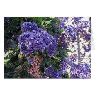 Tarjeta El blanco azul de la floración protagoniza la