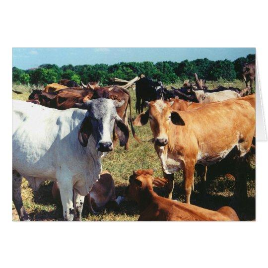 Tarjeta El blanco y las vacas de Brown se cierran para