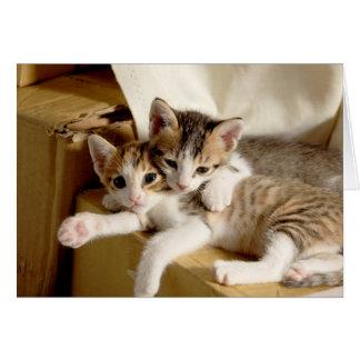 Tarjeta El gatito hermana el saludo en blanco