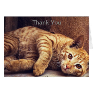 Tarjeta El gatito le agradece cardar, gato le agradece