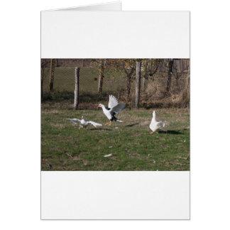 Tarjeta El luchar de los gansos