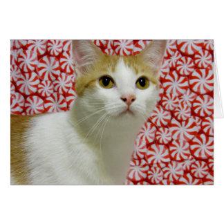 Tarjeta El navidad dulce de Annie (gato/gatito)