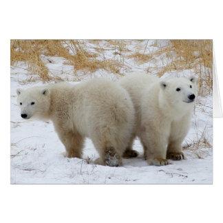Tarjeta El oso polar Cubs carda