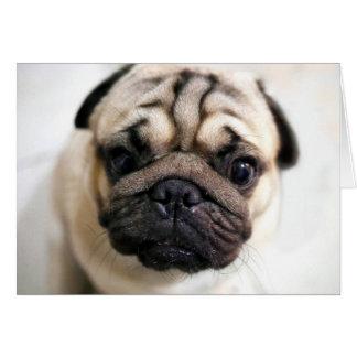 Tarjeta El perrito adorable observa barro amasado