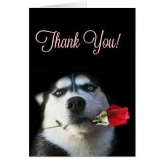 Tarjeta El perro esquimal y el rosa lindos le agradecen