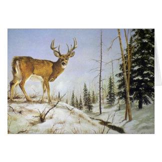 Tarjeta El pico de Jay, ciervo de la cola blanca