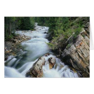 Tarjeta El río Crystal, bosque del Estado de Gunnison,