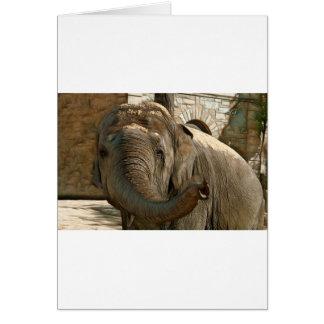 Tarjeta Elefante que señala adelante con el tronco