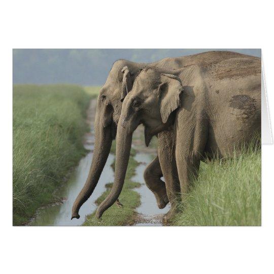 Tarjeta Elefantes indios que cruzan la pista, Corbett