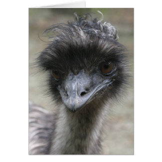 Tarjeta Emu