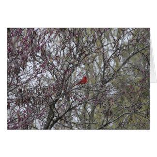 Tarjeta en blanco cardinal