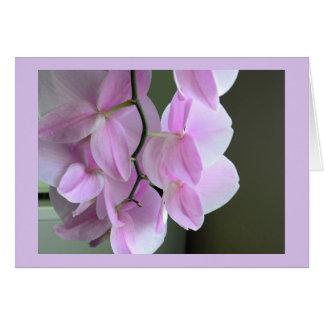 Tarjeta en blanco con las orquídeas rosadas