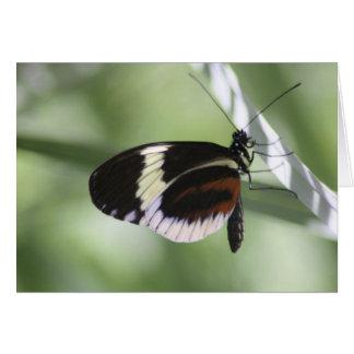 Tarjeta en blanco de Brown negro y de la mariposa