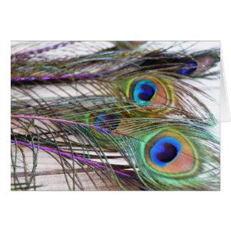 Tarjeta en blanco de la pluma del pavo real con