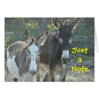 Tarjeta en blanco de las mulas