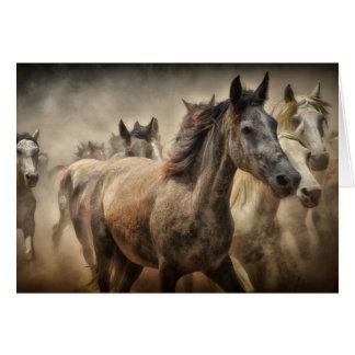 Tarjeta en blanco de los caballos