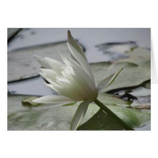 Tarjeta en blanco de Waterlily