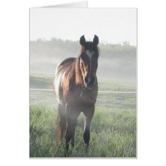 Tarjeta en blanco del caballo árabe