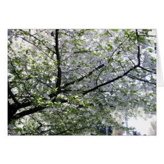 Tarjeta en blanco del cerezo japonés