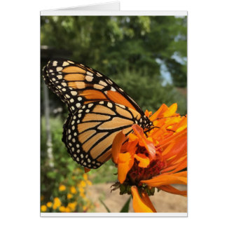 tarjeta en blanco del monarca