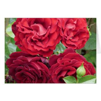 Tarjeta en blanco - los rosas son rojos