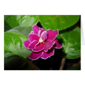 Tarjeta en blanco rosada de la violeta africana
