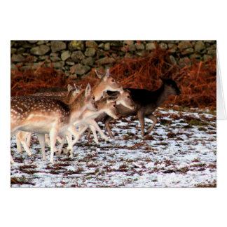 Tarjeta En sus marcas (ciervos)