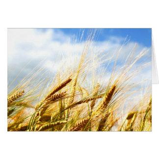 Tarjeta En un círculo de la cosecha en el sol