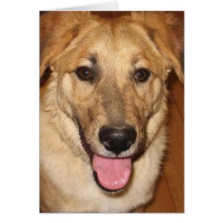 Tarjeta Enhorabuena canina del graduado del veterinario en