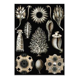 Tarjeta Ernst Haeckel Calcispongiae